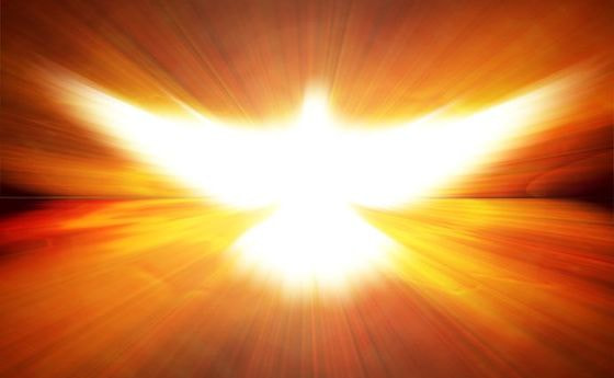 16396265 - shining dove with rays on a dark golden background
