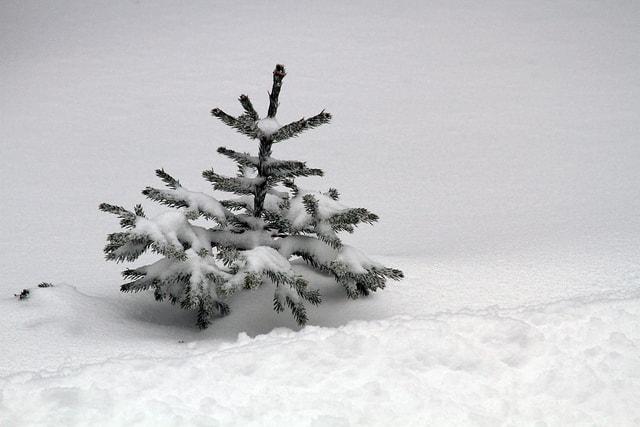 Weihnachten Seit Wann.Warum Feiern Wir Weihnachten Am 25 Dezember